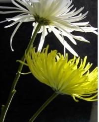 obsèques fleurs