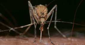 produit-anti-moustiques